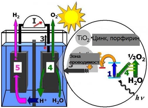 фотосинтез источник энергии