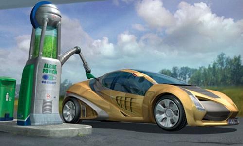 энергия водорослей