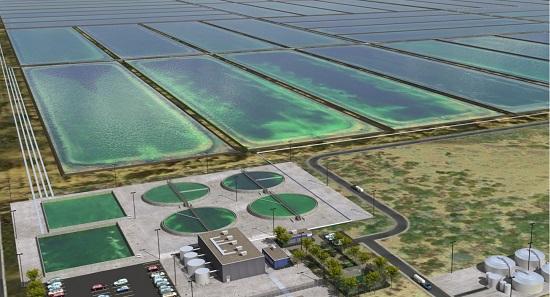 биотопливо из водорослей
