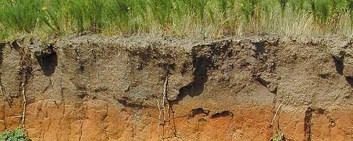 значение почвы