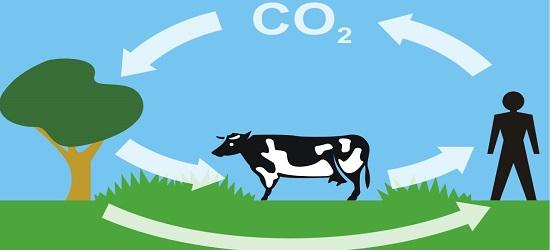фотосинтез и дыхание